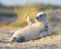 Best Places To See Seals in Norfolk ?