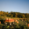 Essex Pumpkin Patches