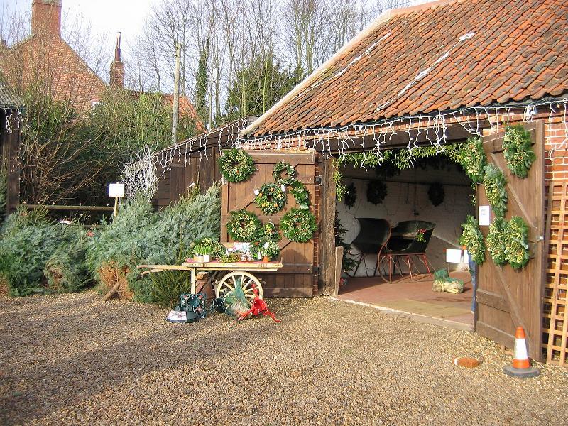 Christmas Trees in Norfolk