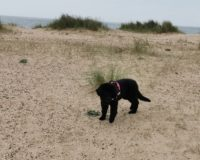 Dog Friendly Beaches Great Yarmouth